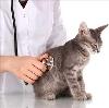 Ветеринарные клиники в Суздале